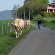 Scène de la vie rurale en Navarre