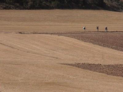De Logroño a Burgos - Le Chemin de St Jacques de Compostelle